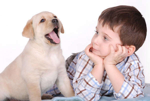 аллергия на домашнего животного препараты