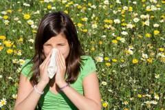 Аллергия на амброзию – бич нашего времени
