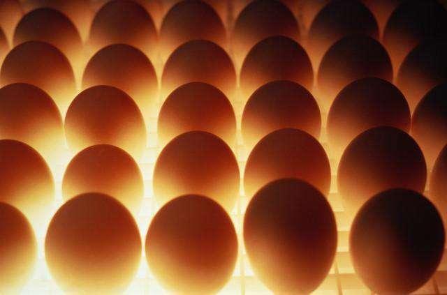 Количество яичного порошка для ежедневного приема
