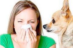 Что делать, если у вас аллергия на домашнего питомца?