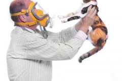 Появилась аллергия на кошек — есть выход!