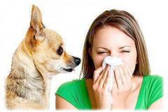 Что необходимо знать об аллергии на собак?