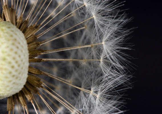 Реакция на пыльцу и пыль