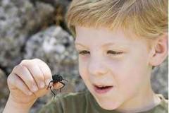 Укус насекомых: причины аллергии, симптомы, первая помощь