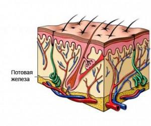 Фурункул: три стадии инфекционного процесса