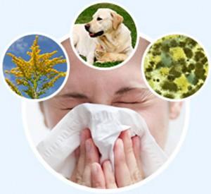 рубрика аллергия